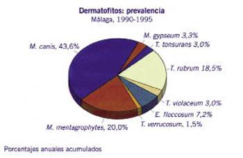 Figura 10.Prevalencia de los distintos dermatifitos en micosis cutáneos en el área de Málaga (1990-1995). Se pone de manifiesto el Mycosporum canis como el más prevalente.
