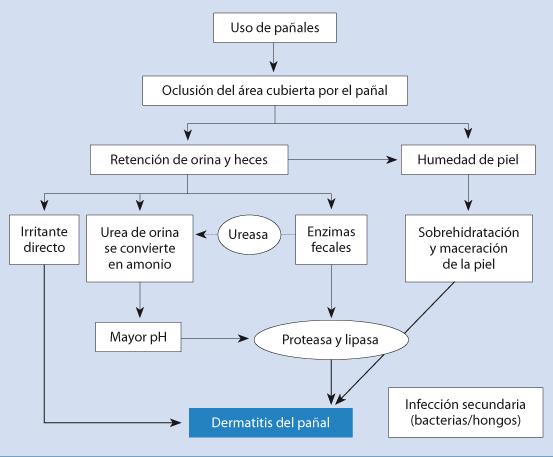 Figura 27. Etiopatogenia de la dermatitis del pañal