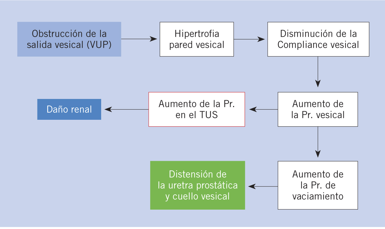 hipoplasia renal bilateral pdf
