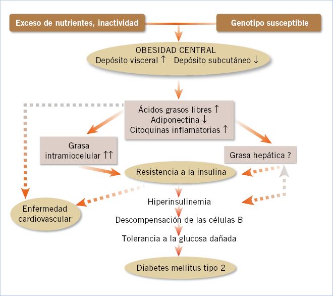 resistencia a la insulina en el tratamiento de la diabetes tipo 1