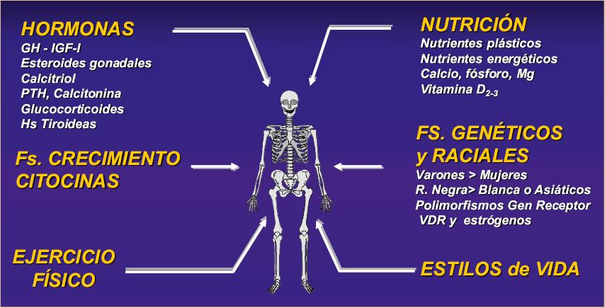 Resultado de imagen para marcadores óseos