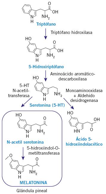 Puesta al día en las aplicaciones de la melatonina