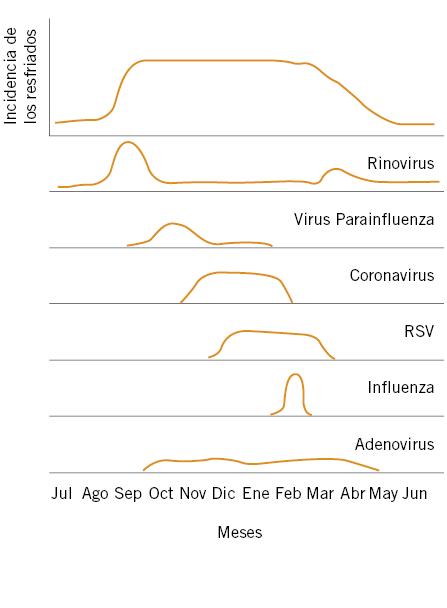 síntomas de infección por rinovirus humano