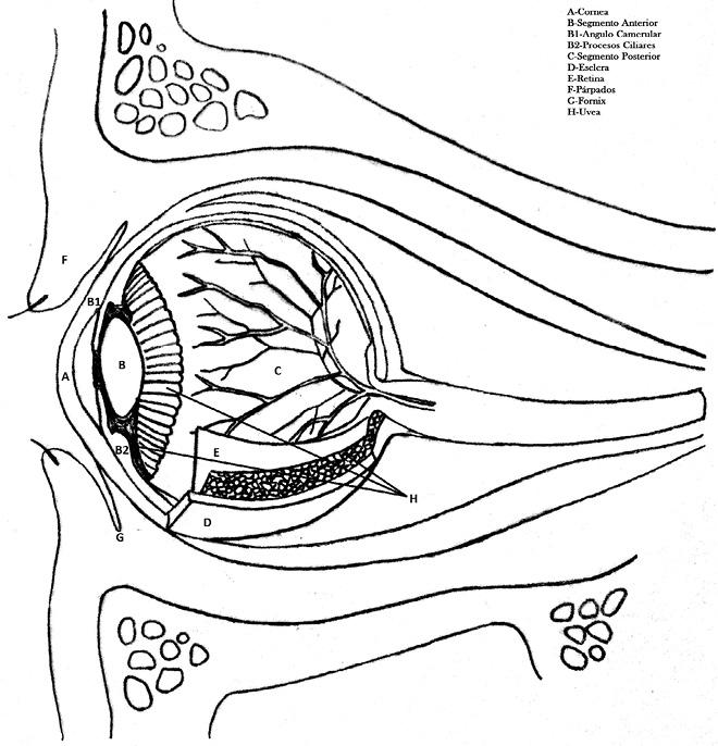El ojo rojo en Pediatría