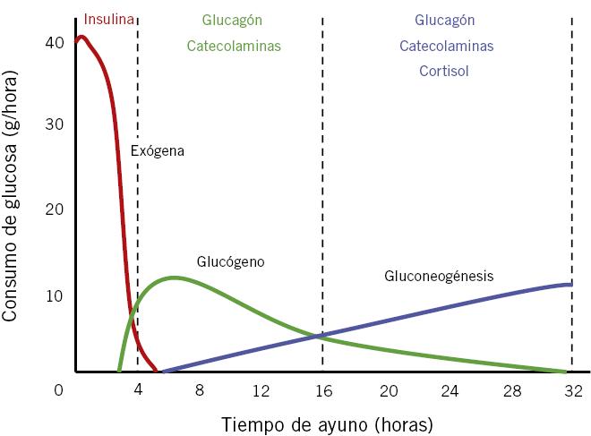 niveles normales de azúcar linear unit linaje pregnancy niños